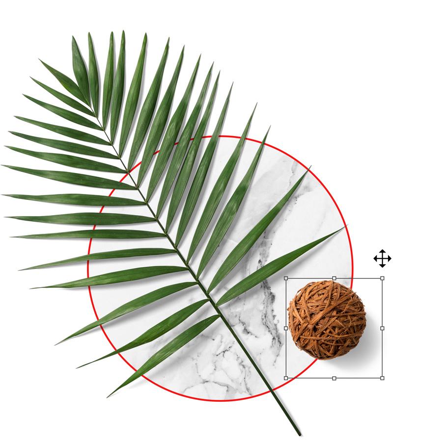 Floral Mockups Palm
